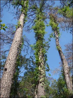 Hình bông và cây 1475-1