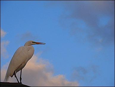resting stork