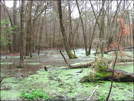 swamp view