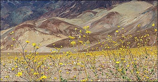IMG_0104 - Death Valley 0 DMH