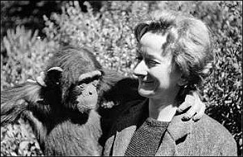 WS with chimpanzee