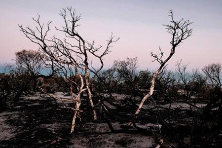 MaiChau-BurntTrees 2