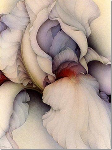 white-iris-marci-mcdonald