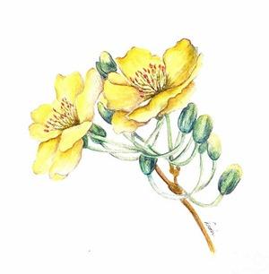 DionDior-ApricotBlossom