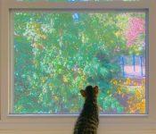 Bonnard-cat-and-autumn-window_thumb.jpg