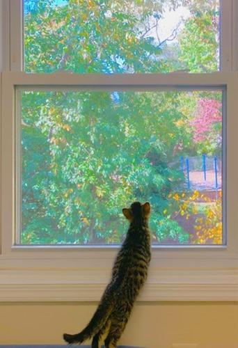 Bonnard cat and autumn window