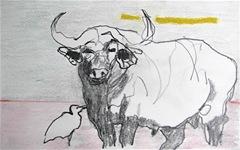 water buffalo pastel